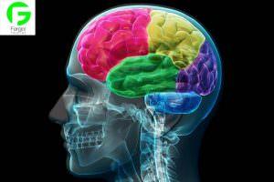 خرید و فروش پرینتر سه بعدی :فرگل سی ان سی مغز2-300x200 فروش پرینتر سه بعدی